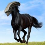 Il Cavallieno